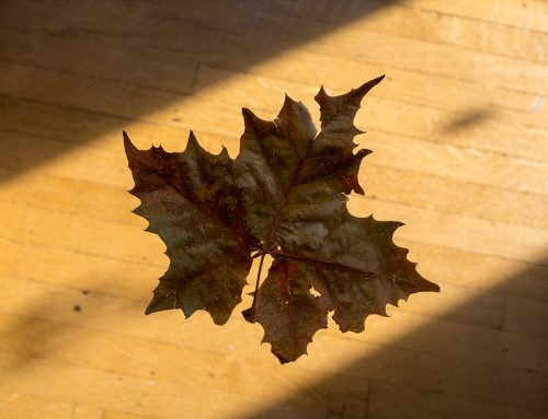 Photographing a leaf