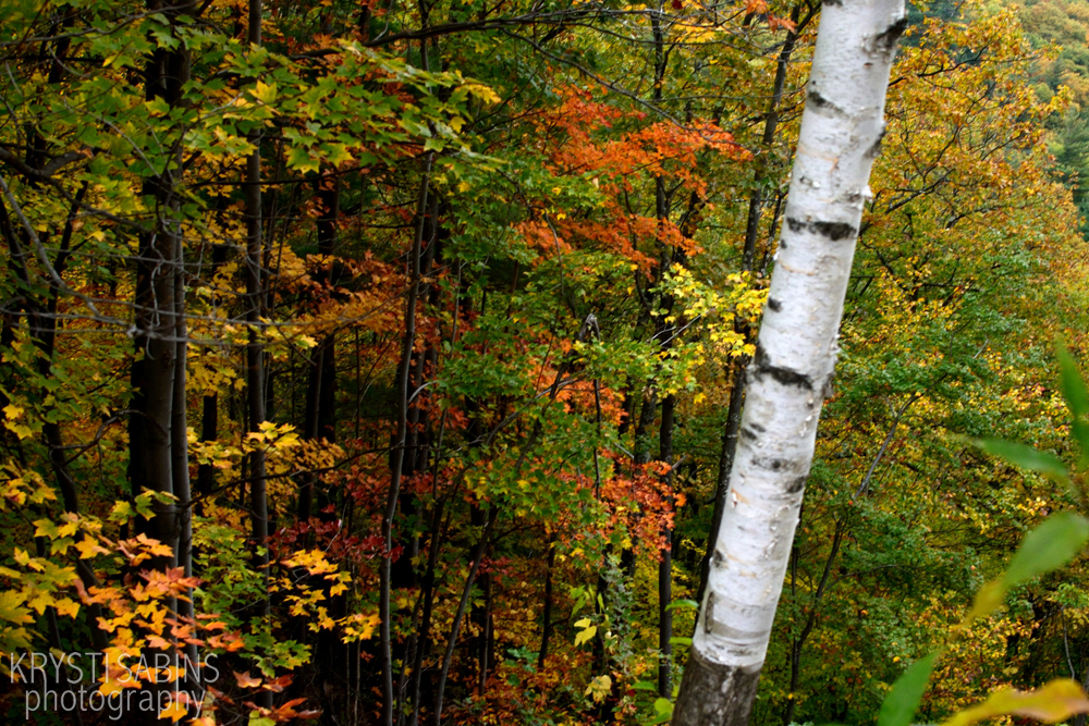 fall-foliage-catskills